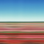 Travelling Still Tulip Fields Holland XXX - click to enlarge
