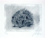Hedgehog - click to enlarge